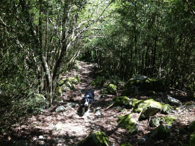 El bosque magico de Sant Vicens de Enclar