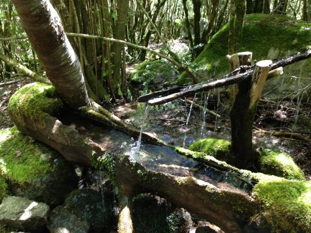 El camino de bajada es un bosque magico